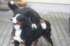 Anni und Timba schließen Freundschaft