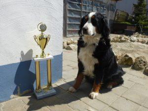 02.05.2016 offener Champion in Schwanstetten am 10.04.2016 Gina (6)
