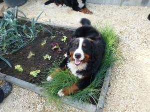 06.08.2014 (5) Donner bei der Gartenarbeit