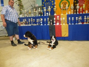 07.07.2013 Donner und Gina bei der Europasieger-Schau in Ingolstadt.Beide haben den Jüngsten-Champion mit Bestnoten erreicht (3)