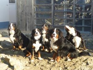 10.12.2013 (8)Alle 5 auf einem Bild von links Anni, Gina,Barca,Donner und Onja
