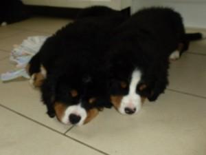 11.05.2013 Donner und Daisy (9)