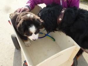 16.11.2014 erster Spaziergang mit Eddy an der Leine  (7)