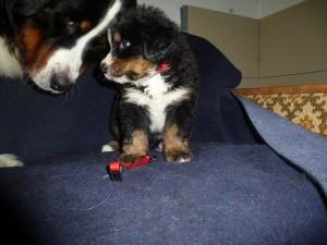 17.12.2012 Carmen 5 Wochen alt mit Mama (8)