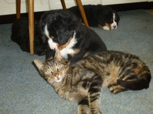 24.06.2015  Zwerge treffen zum ersten mal auf Kater Fuzzy  (1)