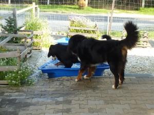 25.07.2014 (3)Gina und Donner