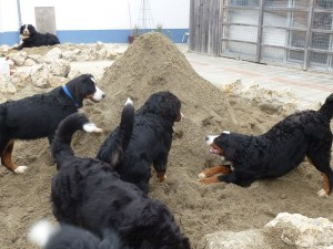 30.09.2013 Neuer Sand viel Spass für groß und klein (2)